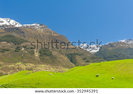 Beautiful landscape of the New Zealand - hills covered by green grass with herds of sheep with mighty mountains covered by snow behind. Glenorchy, New Zealand - stock photo
