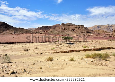 Beautiful landscape of the Timna park, Negev desert, Israel