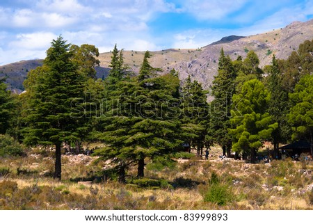 Beautiful landscape of tourists in the pine forest with mountains in Sierra de la Ventana, Argentina