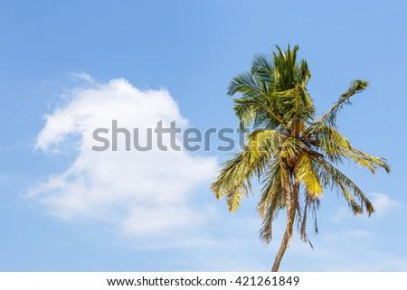 Beautiful landscape palm on beach - stock photo