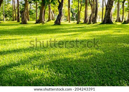 Beautiful Landscape Park Garden - stock photo