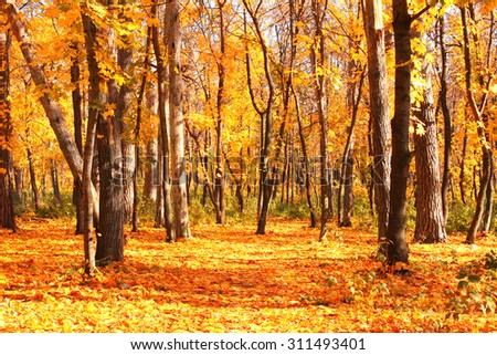 Beautiful landscape - road in autumn forest - stock photo