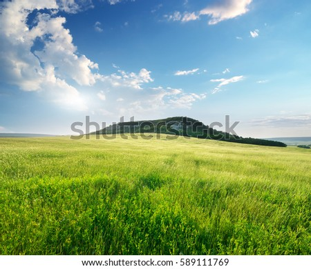 Beautiful landscape spring meadow. Nature composition.