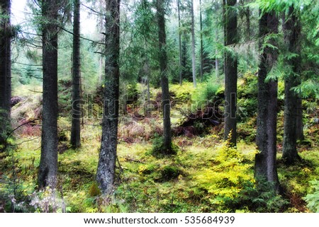 Beautiful landscape spruce forest in the summer