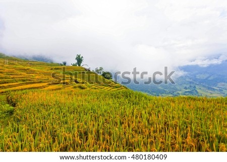 beautiful landscape view of rice terraces in Sapa (North Vietnam)