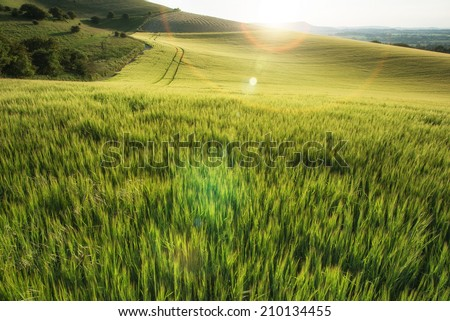 Beautiful landscape wheat field in Summer sunlight evening with added lens flare filter - stock photo