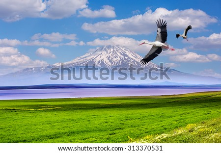 Beautiful landscape with a green field,  stork over pink lake against majestic sky - stock photo