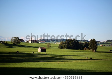 Beautiful landscape with cows and shadows on grass meadow in foreground and farm and provence buildings on horizon against bright blue sky with few low white clouds background, horizontal picture - stock photo