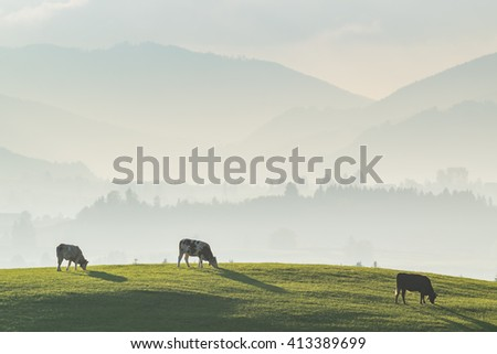 Beautiful landscape with cows pasturing in the meadow