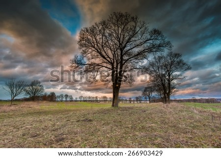 Beautiful landscape with dramatic sky over withered trees on field. Stormy majestic sky - stock photo