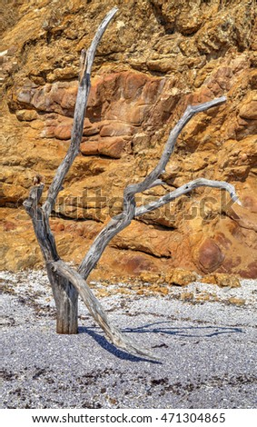 Beautiful landscape with dry old tree on the beach
