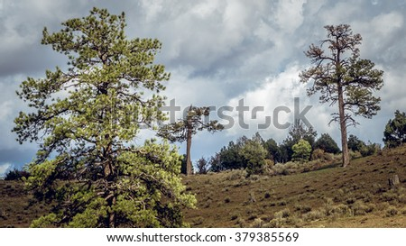 Beautiful landscape with dry pine trees and fluffy clouds