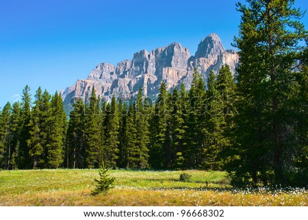 Beautiful landscape with field of flowers and Rocky Mountains in the background in Jasper National Park, Alberta, Canada - stock photo