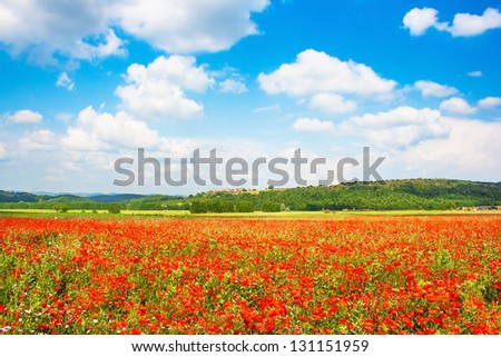 Beautiful landscape with field of red poppy flowers and blue sky in Monteriggioni, Tuscany, Italy - stock photo
