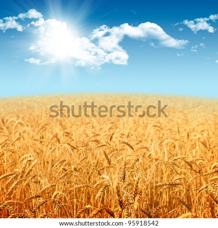Beautiful landscape with field of ripe rye and blue summer sky - stock photo