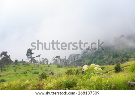 Beautiful landscape with green meadow in the middle of a forest and misty hills. Sallow dof. Focus on foreground. - stock photo