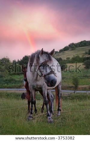 beautiful landscape with horse and rainbow - stock photo