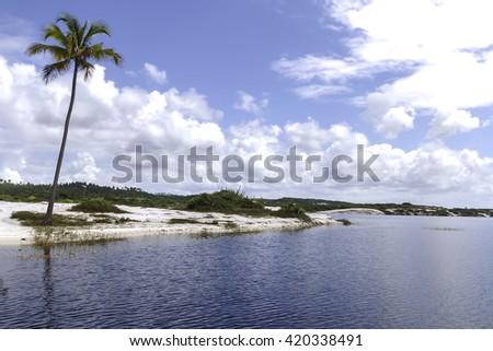 beautiful landscape with lone coconut tree on island in Costa do Sauipe in Bahia Brazil - stock photo