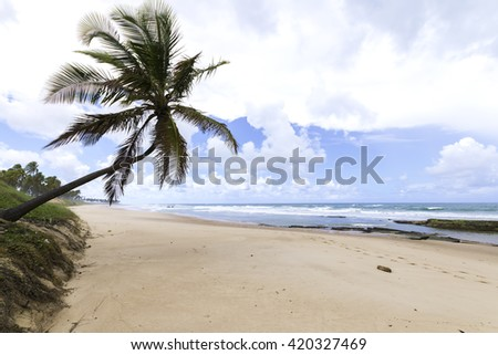 beautiful landscape with lone coconut tree on paradise beach in Bahia Brazil - stock photo