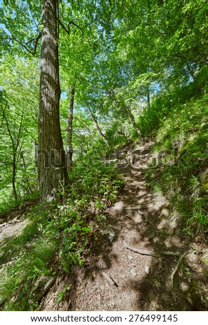 Beautiful landscape with marked trail on a mountain forest in a sunny spring day