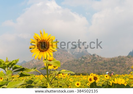 Beautiful landscape with sunflower background