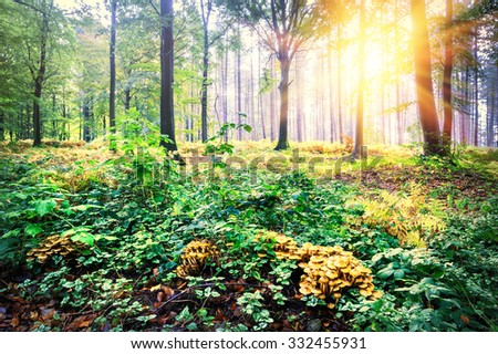 Beautiful landscape with sunset in autumn forest. Nature background - stock photo