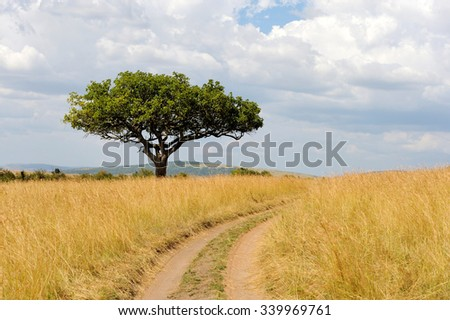 Beautiful landscape with tree in Africa. National park of Kenya - stock photo
