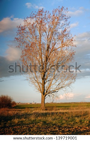 Beautiful landscape with trees against blue sky