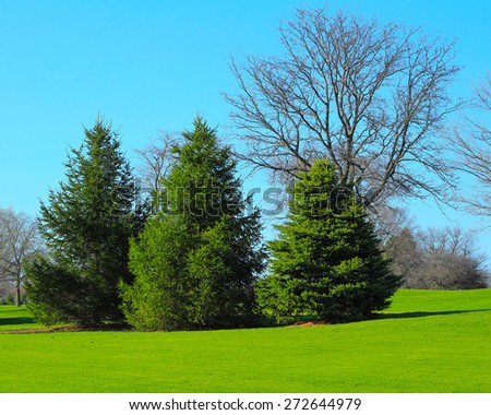 Beautiful landscape with trees and green grass - stock photo