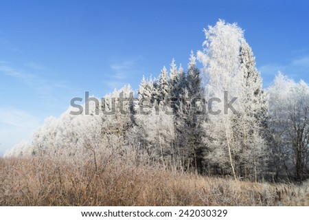 Beautiful landscape with trees covered with hoarfrost on a sunny frosty day - stock photo