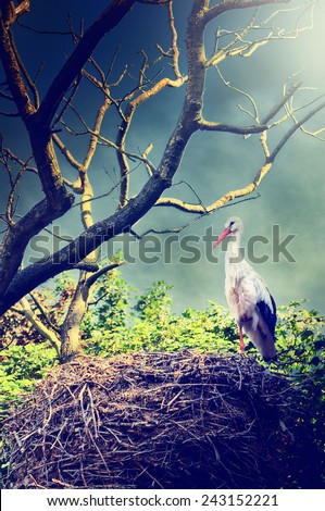 Beautiful landscape with wild stork in nest