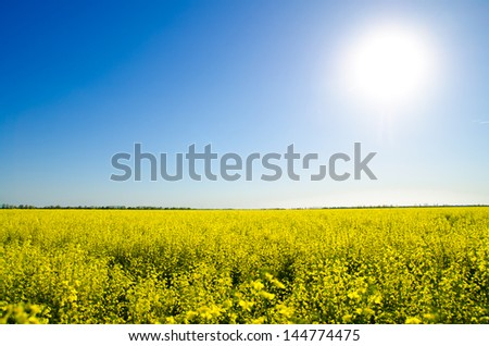 beautiful landscape with yellow field and sun