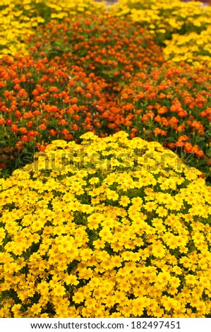 Beautiful landscaped garden meadow covered with wildflowers of vivid colors. - stock photo