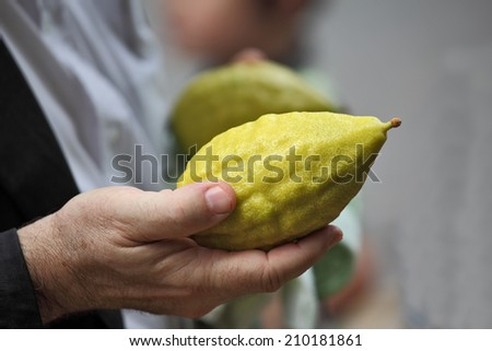 Beautiful large male hands hold a ritual Citron fruit for the Jewish holiday of Sukkot - stock photo