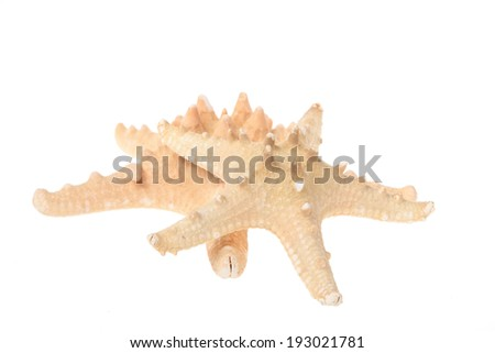 Beautiful large starfish/Two starfish of different sizes isolated on the white - stock photo