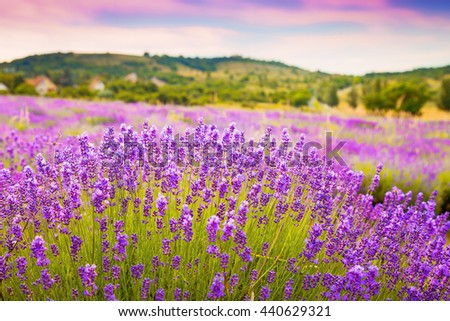 Beautiful lavender field with gorgeous colorful sky background - stock photo