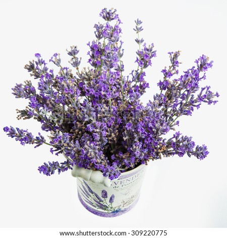 Beautiful lavender in wooden pot isolated on white - stock photo