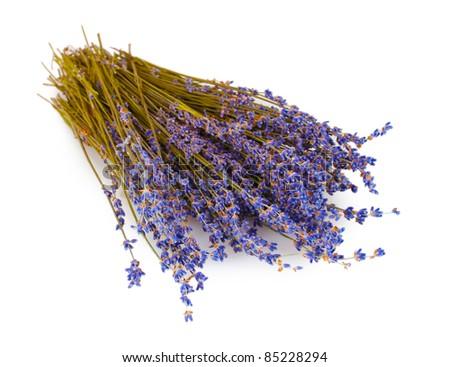 Beautiful lavender isolated on white - stock photo