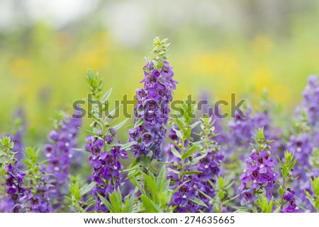 Beautiful lavenders in the garden, Purple flowers in the garden for background or wallpaper, soft focus - stock photo