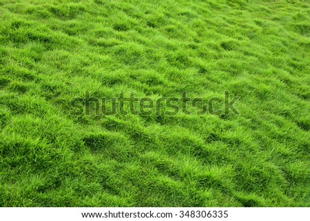 Beautiful lawn of green grass. Hastenburaphobia - fear of grass. - stock photo