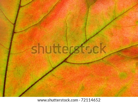 beautiful leaf, autumn background - stock photo