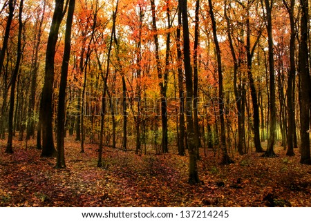 Beautiful leaf colors in forest in fall - stock photo