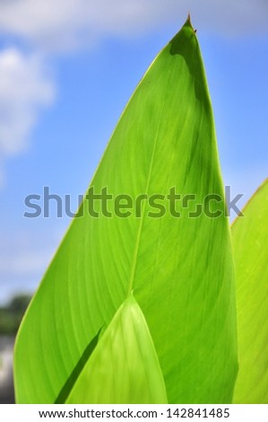 beautiful leaf in spring isolated,closeup - stock photo