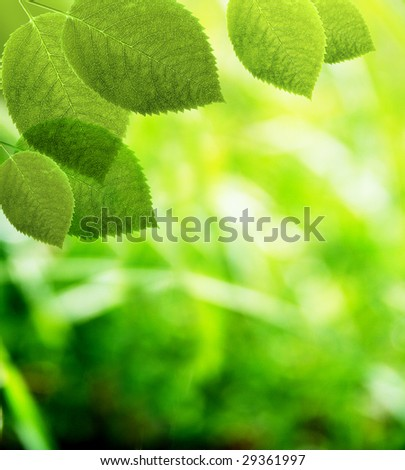 Beautiful leaf on light background