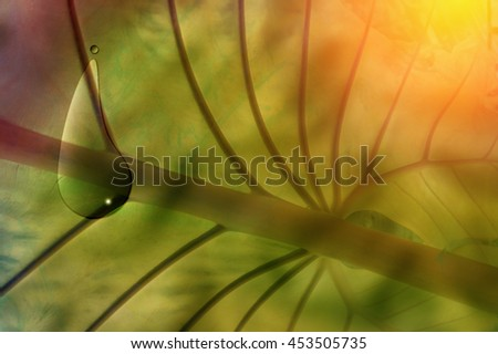 beautiful leaf with water drop with light flare effect - stock photo