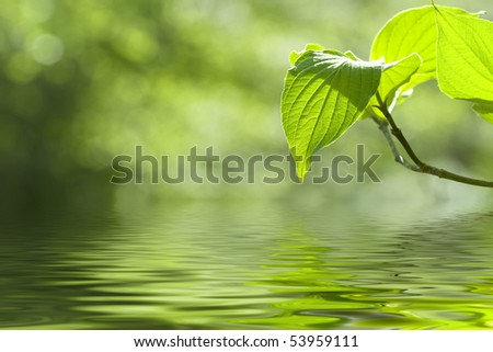 Beautiful leaves reflected in water - stock photo