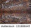 beautiful leopard skin - stock photo