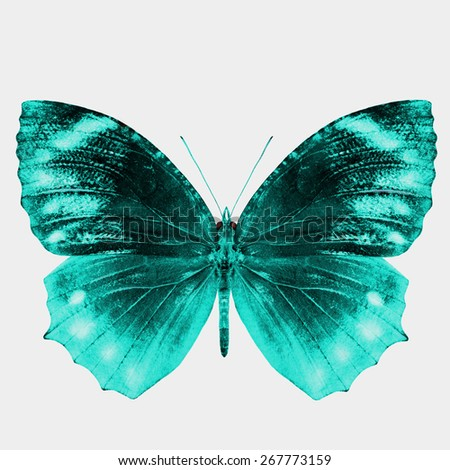 Beautiful Light Blue Buterfly isolated on white background - stock photo
