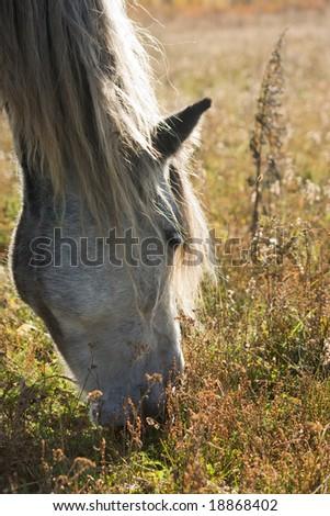 beautiful light horse grazes on meadow by autumn - stock photo