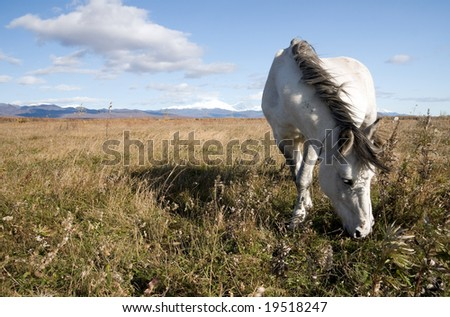 beautiful light horse grazes on meadow by autumn